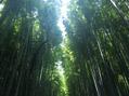 夏の京都 *
