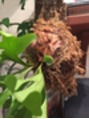 LUXEの観葉植物♪
