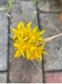 サボテンの花は 華ですね