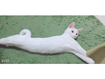 私の可愛いネコちゃん_20201022_1