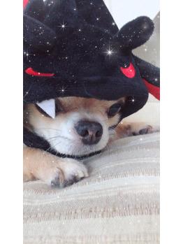 ハロウィンポンタ★_20170914_2