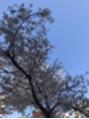 春!!!!
