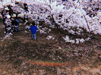 お花見行きました^ ^_20190404_1