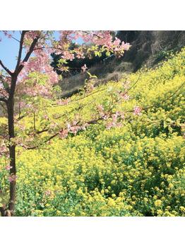 春の訪れ_20180311_1