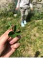四葉のクローバー