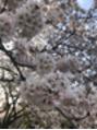春といえば!【noel 溝の口店】