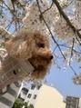 愛犬ミモちゃん