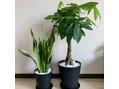 我が家の植物達