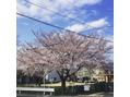 桜の季節ですね♪