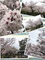 de.vise恒例お花見BBQ☆in五月山