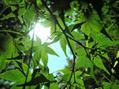 髪・頭皮の紫外線対策は春から(*^▽^*)