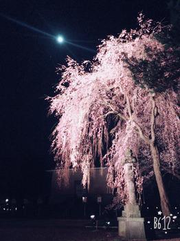 夜桜に行ってきました♪_20170412_2