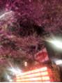 レア 渋谷(Le'a)桜並木