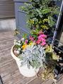 店前のお花を新しくしていただきました(^-^)