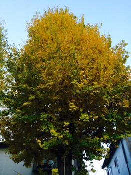 秋から冬へ_20161203_1