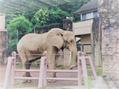 多摩動物園☆