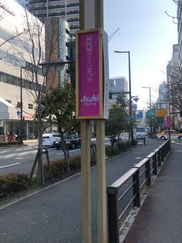 桜祭りはじまってました☆_20180324_3