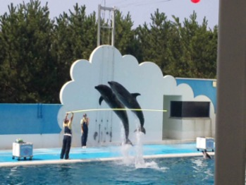 イルカに会いに・・・