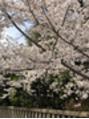 ☆桜が綺麗ですね☆