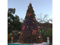 クリスマスツリー2。