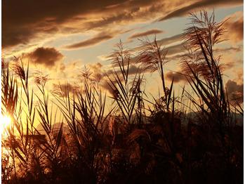 秋の夕陽_20191206_1