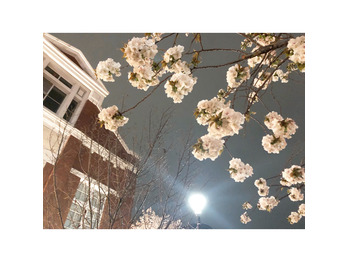 ~ 夜桜 ~_20190414_1