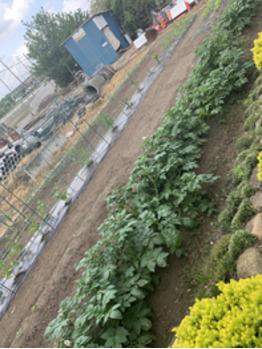 家庭菜園_20190520_1