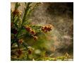 花粉の季節と髪ー!