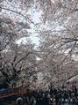 お桜見に行ってきました