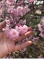 うち花見♪