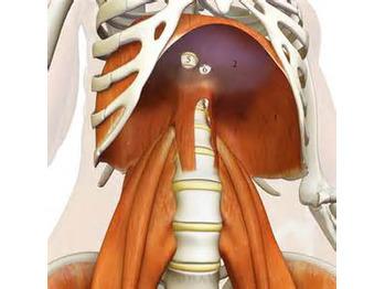 呼吸と横隔膜と大腰筋_20161221_2