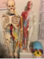 今年もハワイ大学医学部の解剖実習に参加します