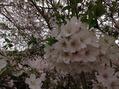 春~(^^♪