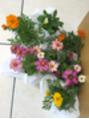 10月は花の苗プレゼント