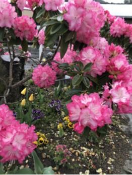春の嵐_20180414_1