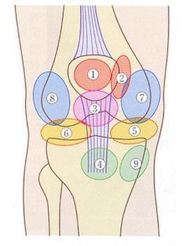 膝痛:膝蓋大腿関節、膝蓋骨_20190413_1