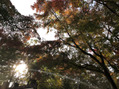 高尾山Part2