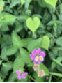 可愛い花みつけました!