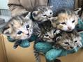 ネコちゃん達5匹、里親見つかりました(^з^)-☆