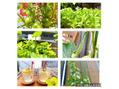 ボカスパで育つ野菜ボカベジ