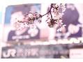 桜咲く季節のおススメ♪アロマリンパ50分3390円☆
