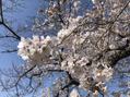 春のよもぎ蒸しの新作 春の養生ブレンド