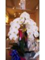 大宮の先輩からとっても立派な胡蝶蘭が届きました♪
