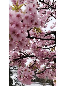 春~♪_20190326_2