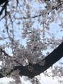 4月ですね(^^)
