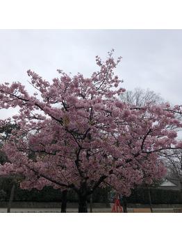 春~♪_20190326_1