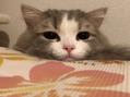 愛猫アーサーのゴロゴロ生活
