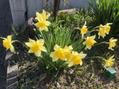 春らしくなってきましたね!