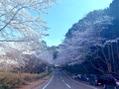 春よ来い~☆