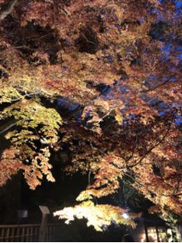 秋の終わりに(^^)_20181125_3